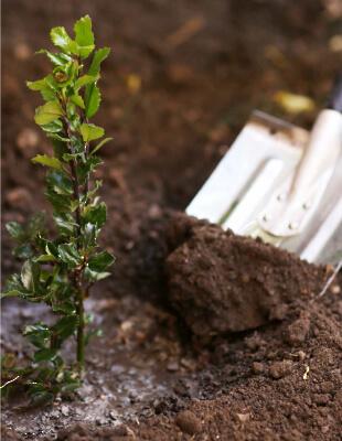 Plant Establishment