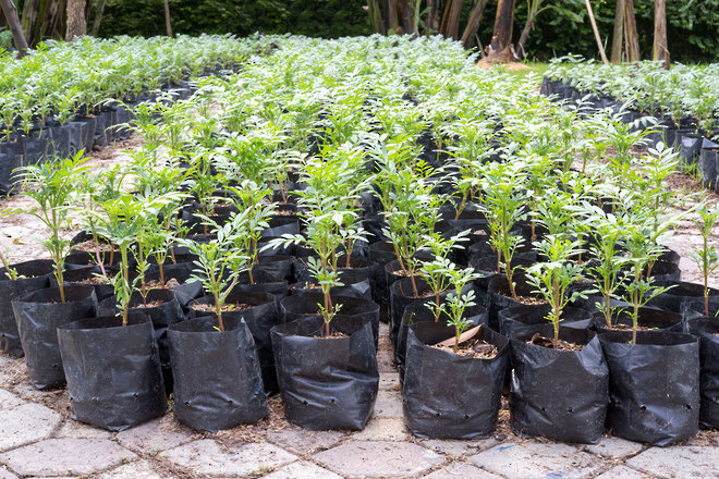 Planter Bags 100 Pack image 1
