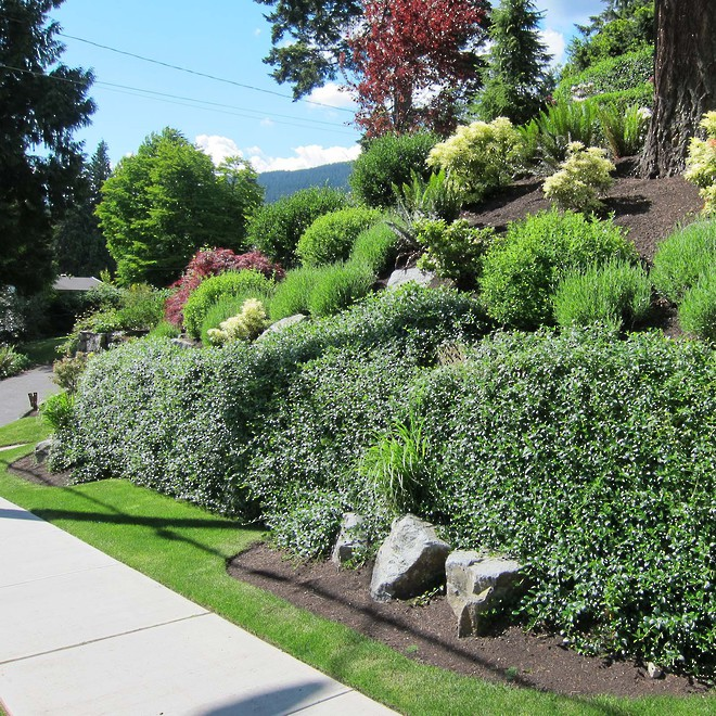 Flex MSE Vegetated Retaining Wall System image 3