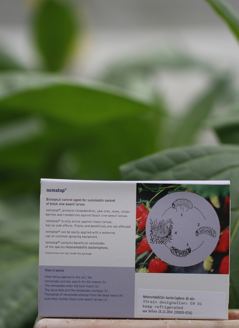 nematop® for Black Vine Weevil and Grass Grub Control image 1
