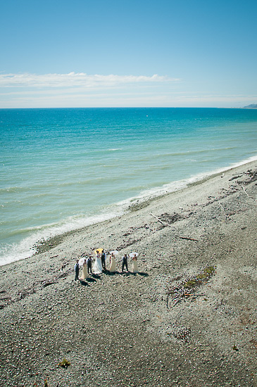 photography photo image nelson nz new zealand wedding bride boutique_photography beach