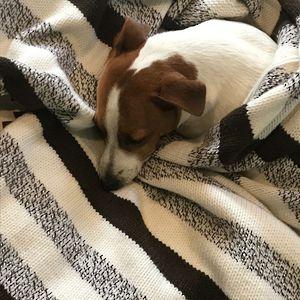 The Ultimate Merino Cuddly Blanket Kit