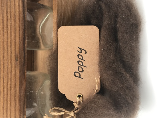 Single Sheep Carded Wool Release - Poppy  (300 Gram Bags) image 0