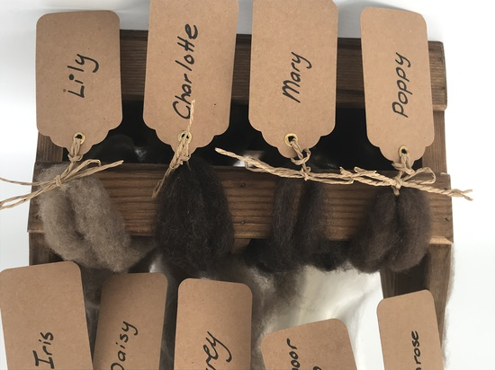 Single Sheep Carded Wool Release - Mary  (300 Gram Bags) image 2