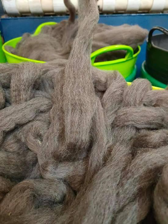 Single Sheep Special 8 Ply Knitting Yarn - Abigail image 5