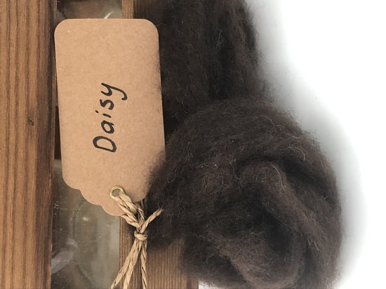 Single Sheep Carded Wool Release - Daisy  (300 Gram Bags) image 0