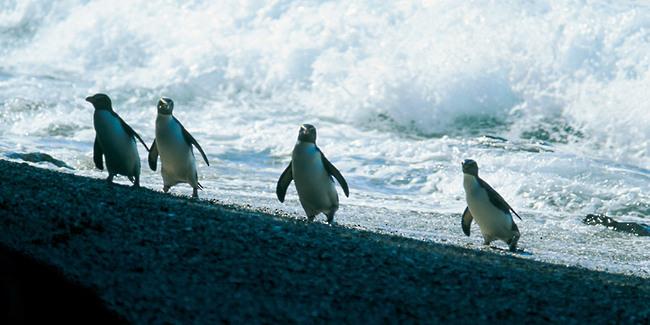 Pinguins Fjord Nouvelle Zélande