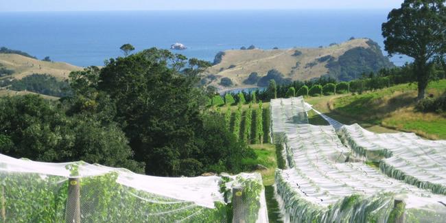 Ile de Waiheka Auckland Nouvelle Zélande