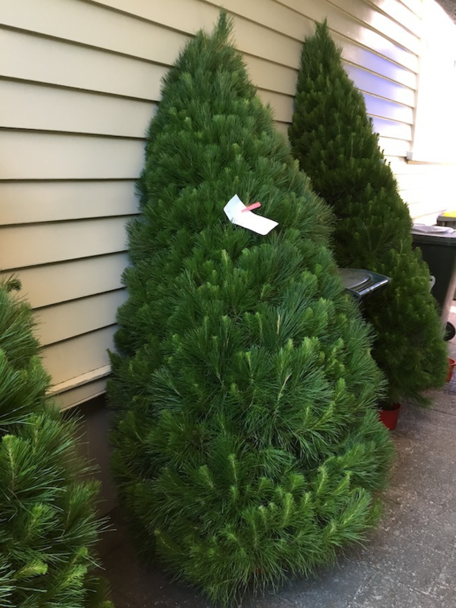 Fresh Xmas Trees - Open daily - SOLD OUT FOR 2020 - See you in 2021 image 8