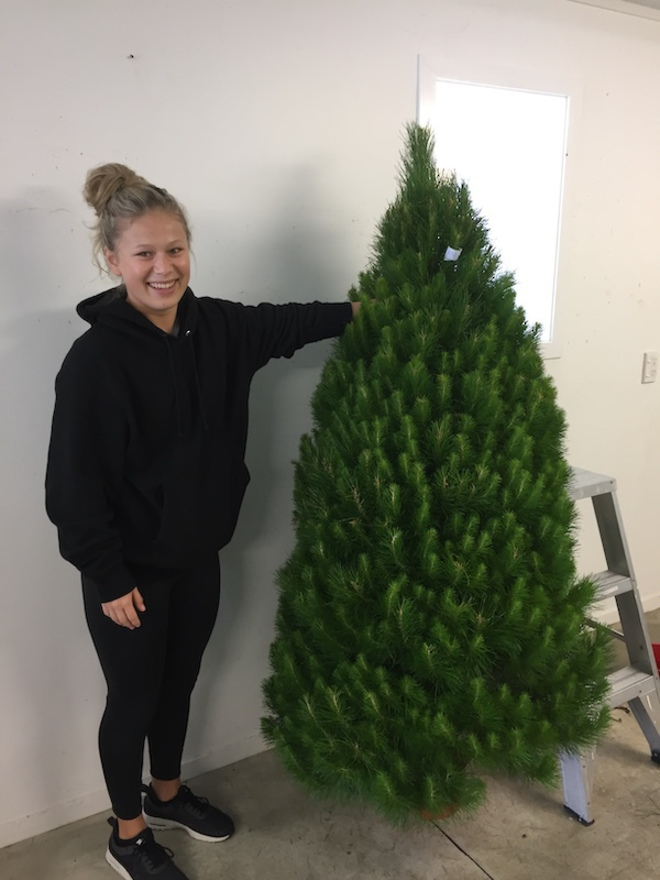 Fresh Xmas Trees - Open daily - SOLD OUT FOR 2020 - See you in 2021 image 1