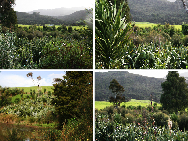Mangawhai Landscape Architecture