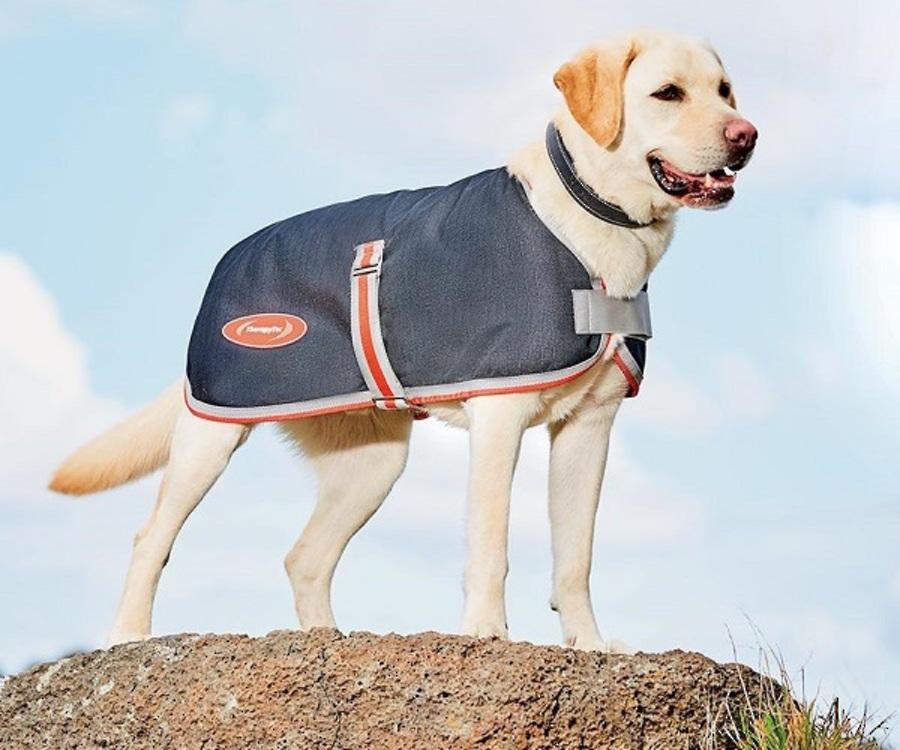 Weatherbeeta Comfitec 1200D Therapy-Tec Dog Coat image 0