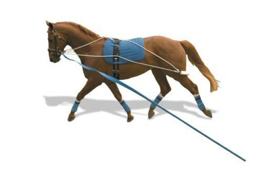 Kincade Lungeing Training System image 0
