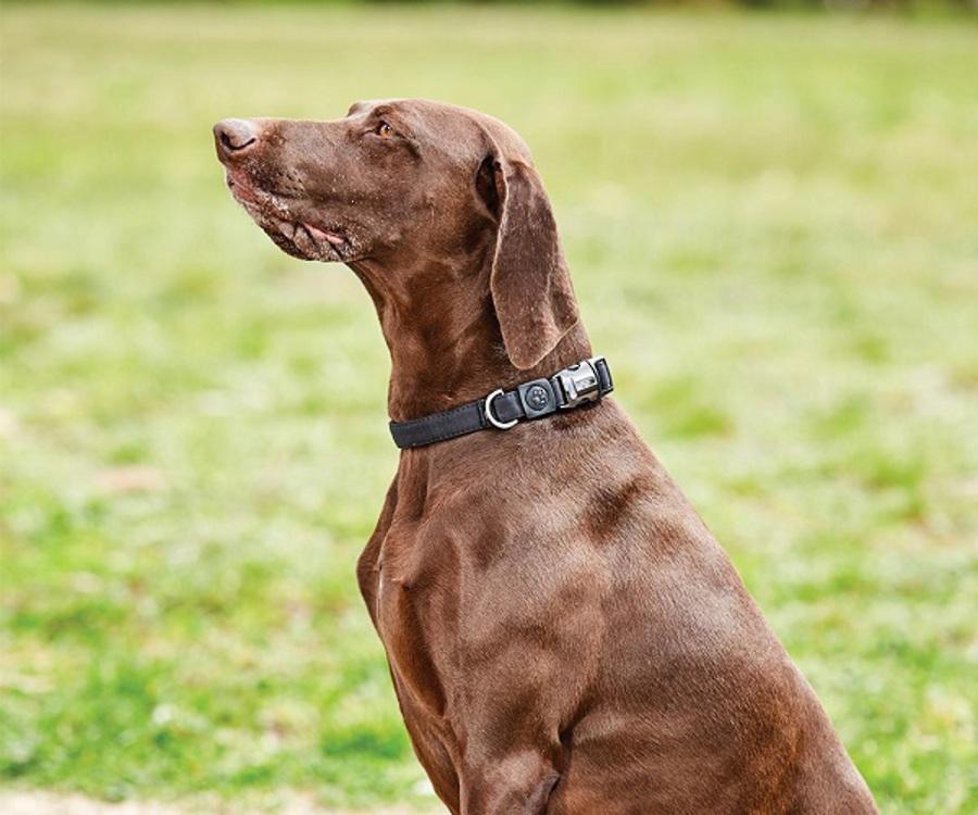 Weatherbeeta Elegance Dog Collar image 2