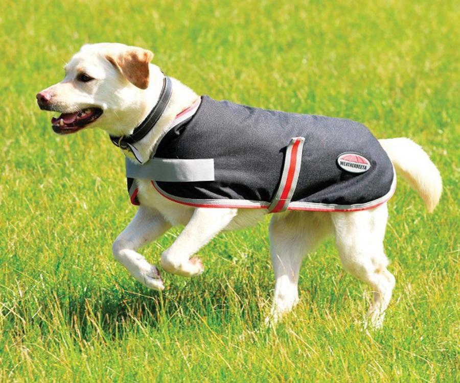 Weatherbeeta Comfitec 1200D Therapy-Tec Dog Coat image 1