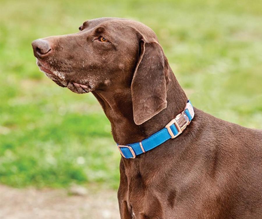Weatherbeeta Elegance Dog Collar image 0