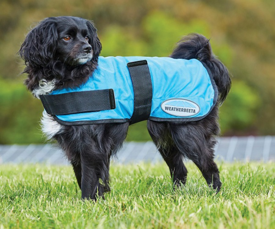 Weatherbeeta Therapy-Tec Cooling Dog Coat image 0