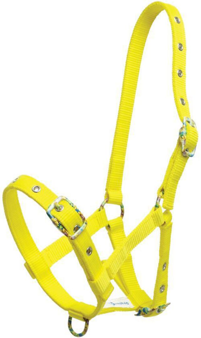 Zilco Foal Halter with Coloured Buckles image 0