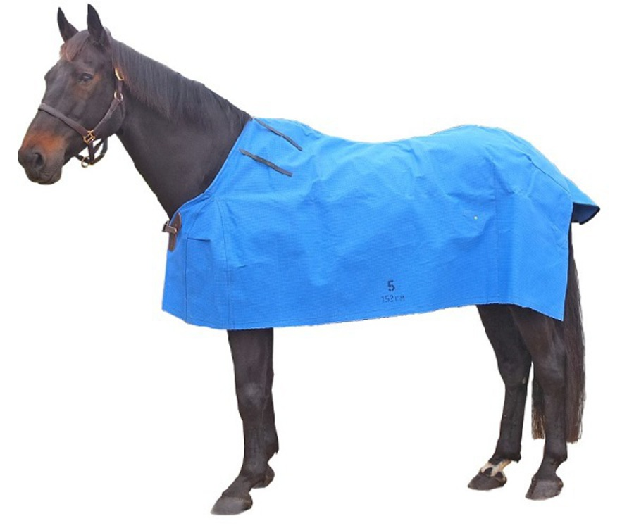 Forbes Stable Star Canvas Rug image 0