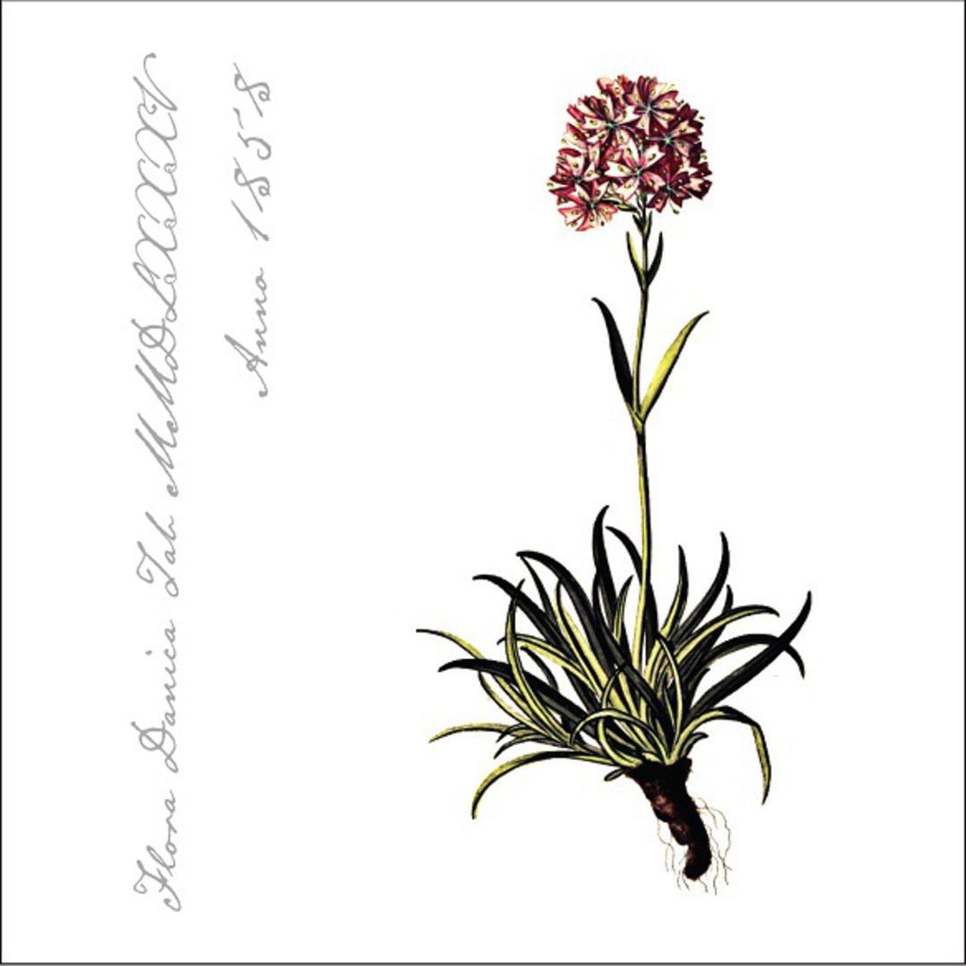 Flora Danica Paper Napkins, Carnation image 0