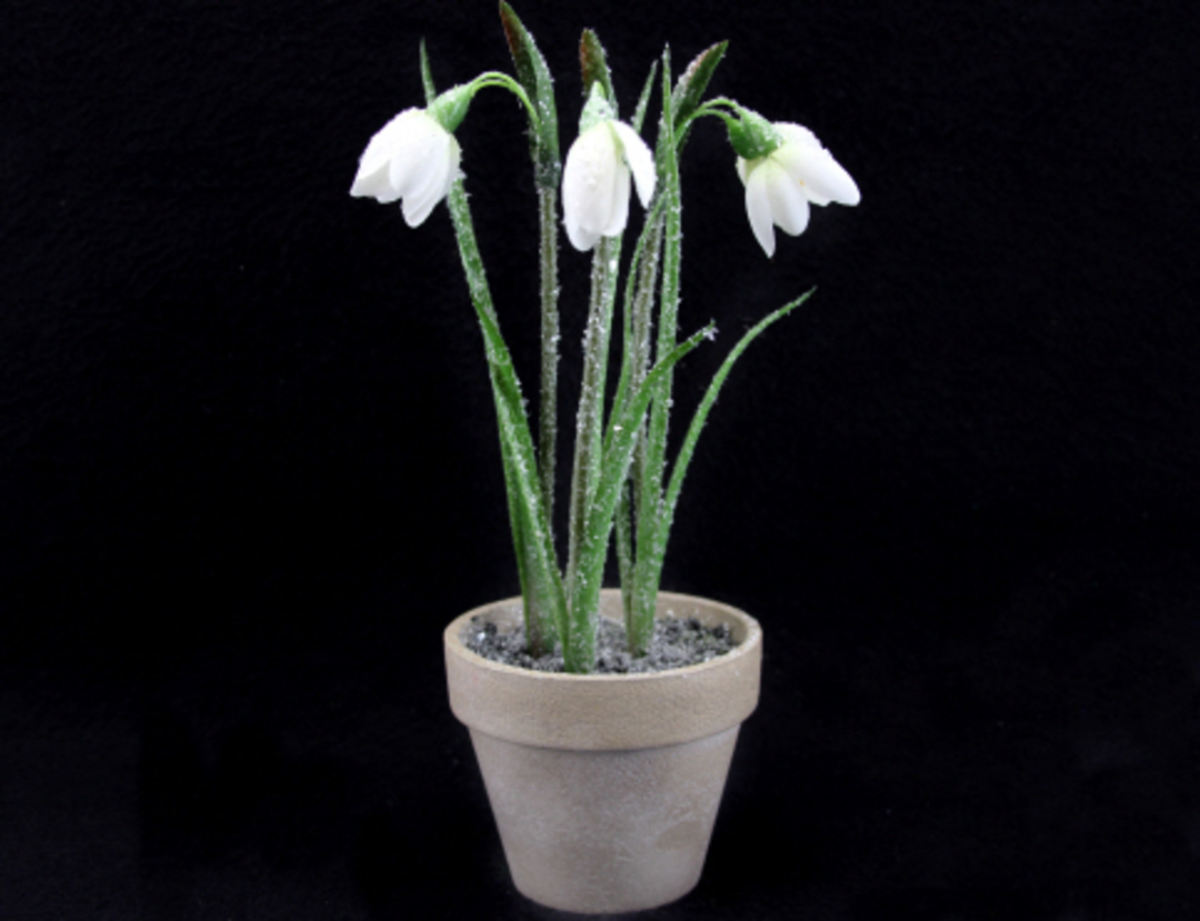 Standing Potted Snowdrop image 0