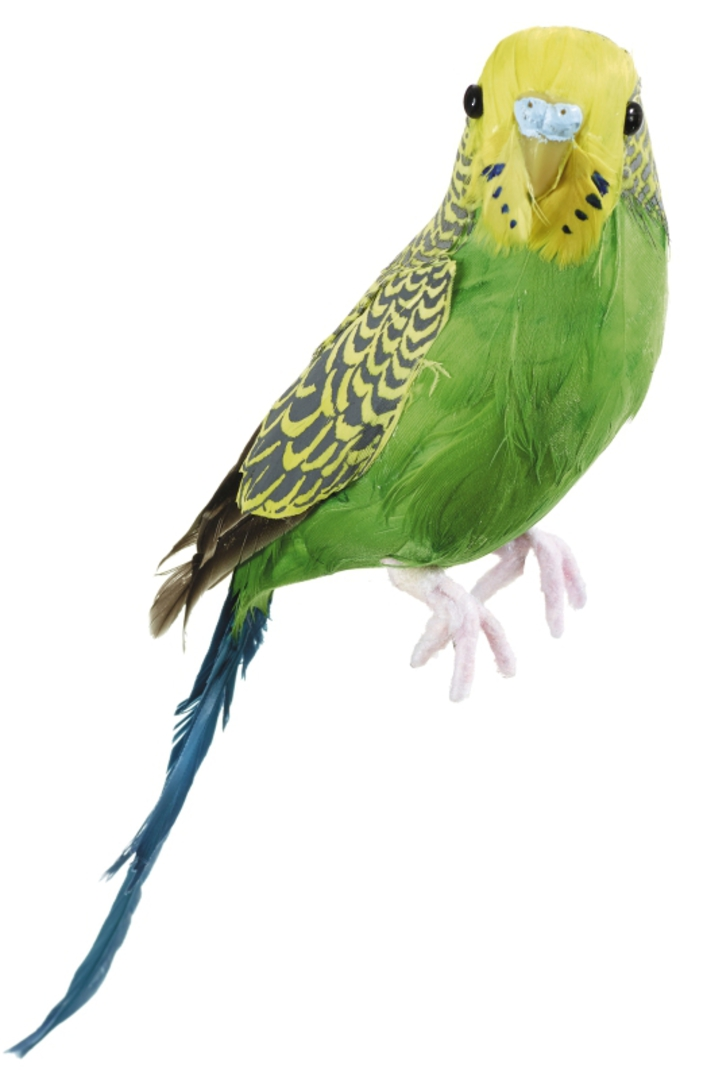 Budgerigar Green/Yellow 20cm image 0