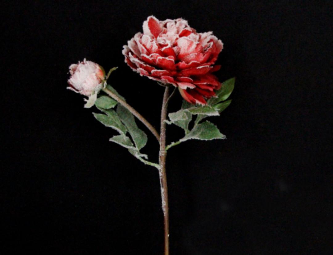 Snowy Red Peony Stem 50cm image 0