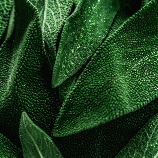 Sage essential oil image 0