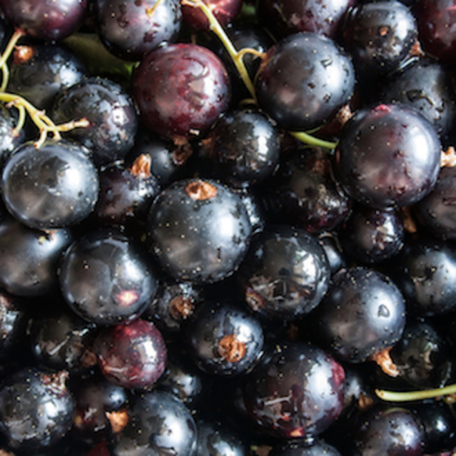 Blackcurrant seed oil, NZ image 0