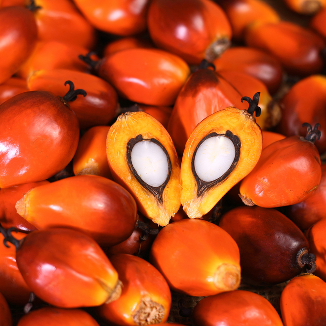 Palm oil, certified organic, RSPO certified image 0