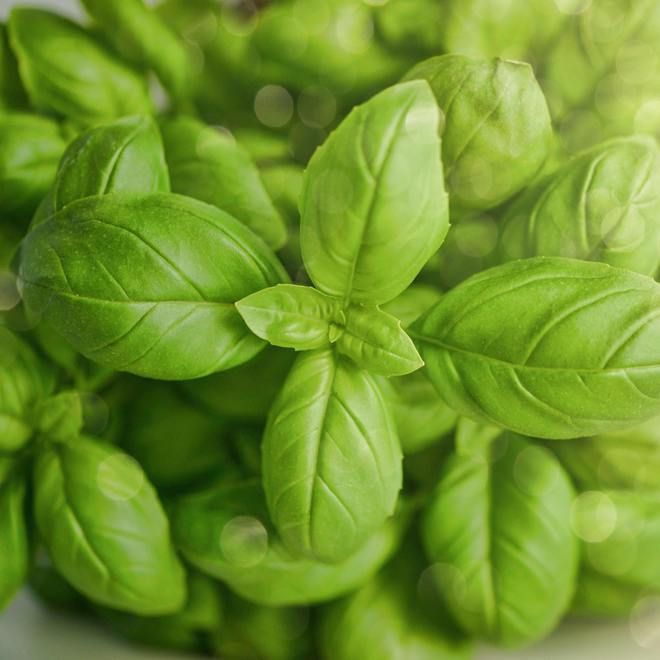 Basil essential oil, certified organic image 0