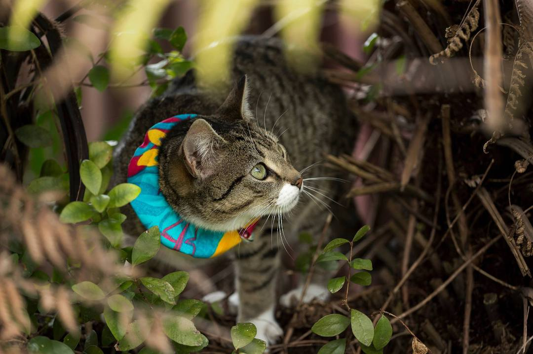 Kiwi Cat Collars image 0