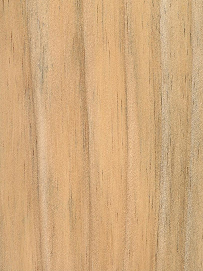 Radiata Pine image 0