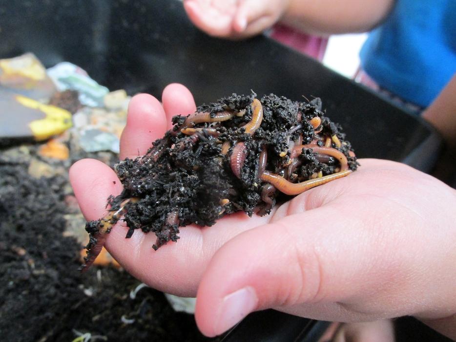 Kids Campus Worm farm. Thankyou Tauranga City Council