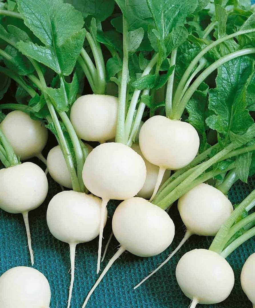 Radish Hailstone - Pure white globe shaped radish