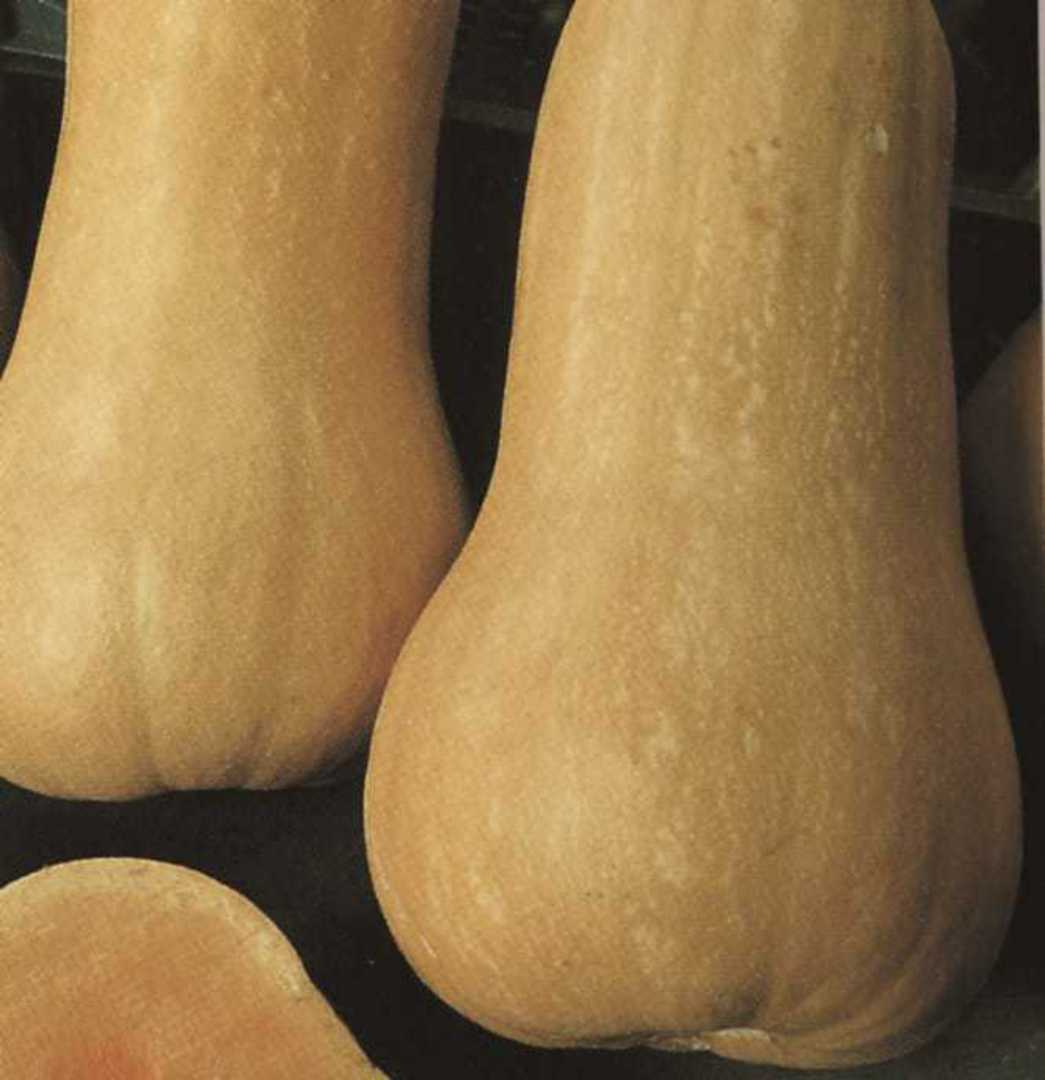 Organic Squash Waltham Butternut - Sweet orange flesh with a buff coloured skin