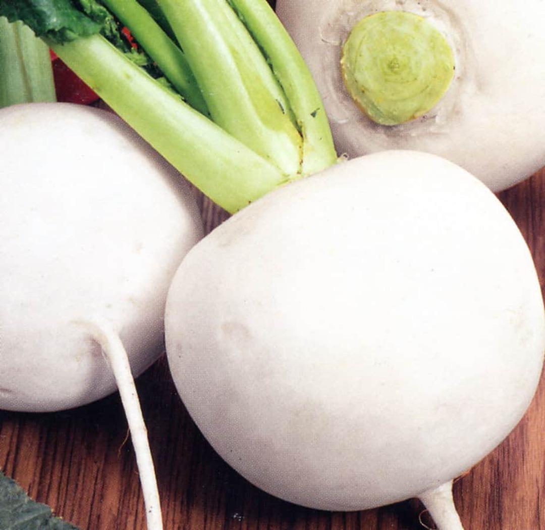 Turnip Snowball - globe turnip with white skin and flesh