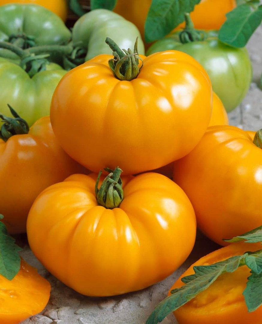 Tomato Chef's Choice Yellow F1 - Hearty yellow beefsteak