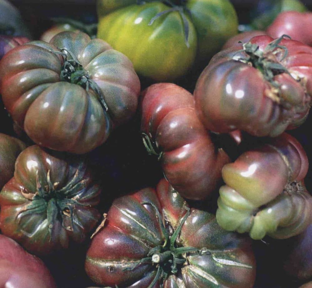 Tomato Black Krim - dusky reddish brown tomatoes