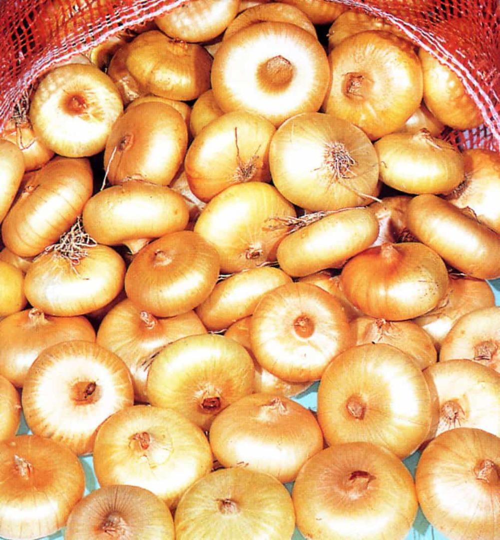 Onion Borettana - Small Italian button onions