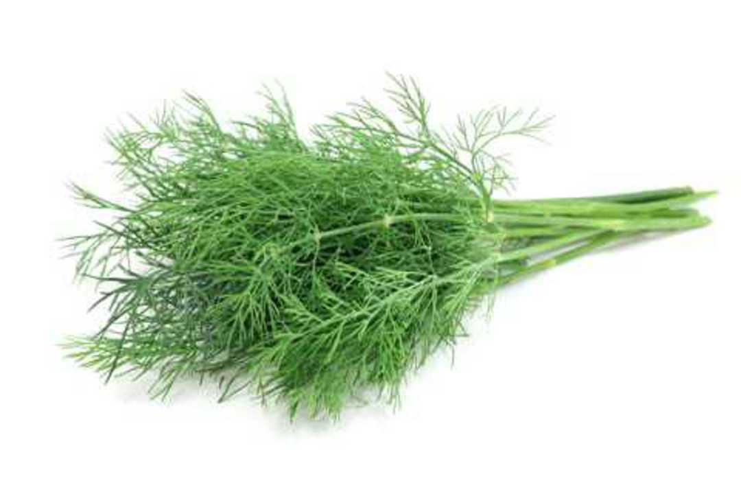 Dill Lena - dark green foliage that's sweetly fragrant.