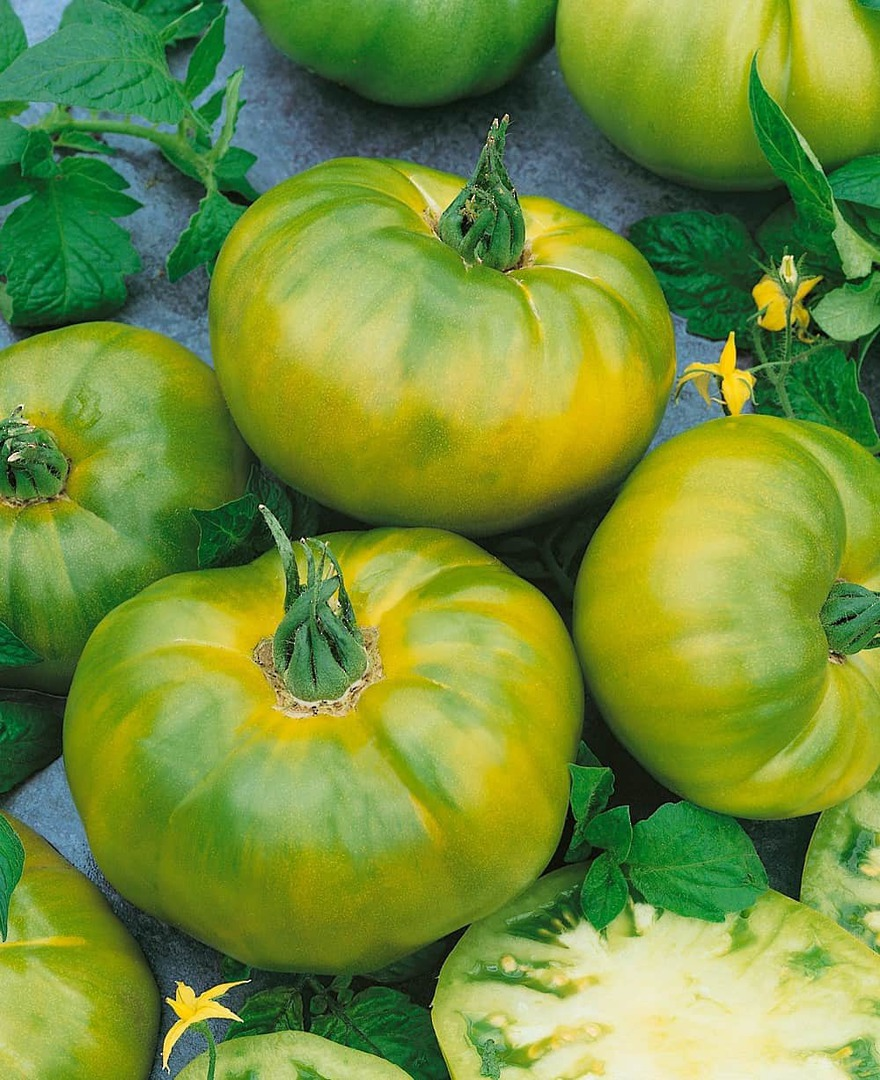 Tomato Chef's Choice Green F1 -Beautiful green with subtle yellow stripes