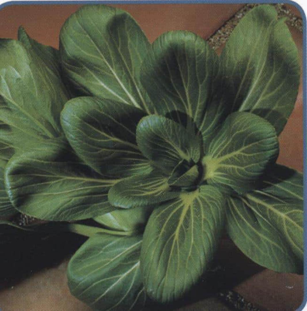 Pak Choi Dark Dragon - dark green with blistered leaves