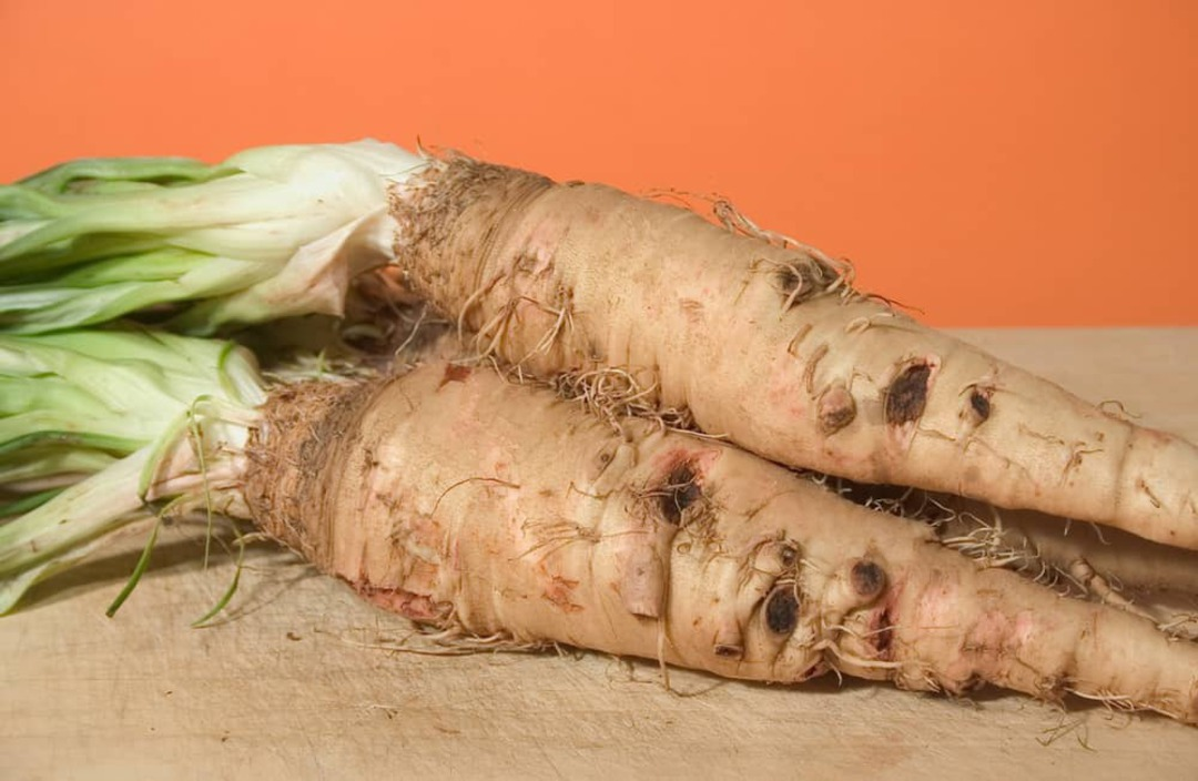 Salsify - harvested roots with oyster like flavour