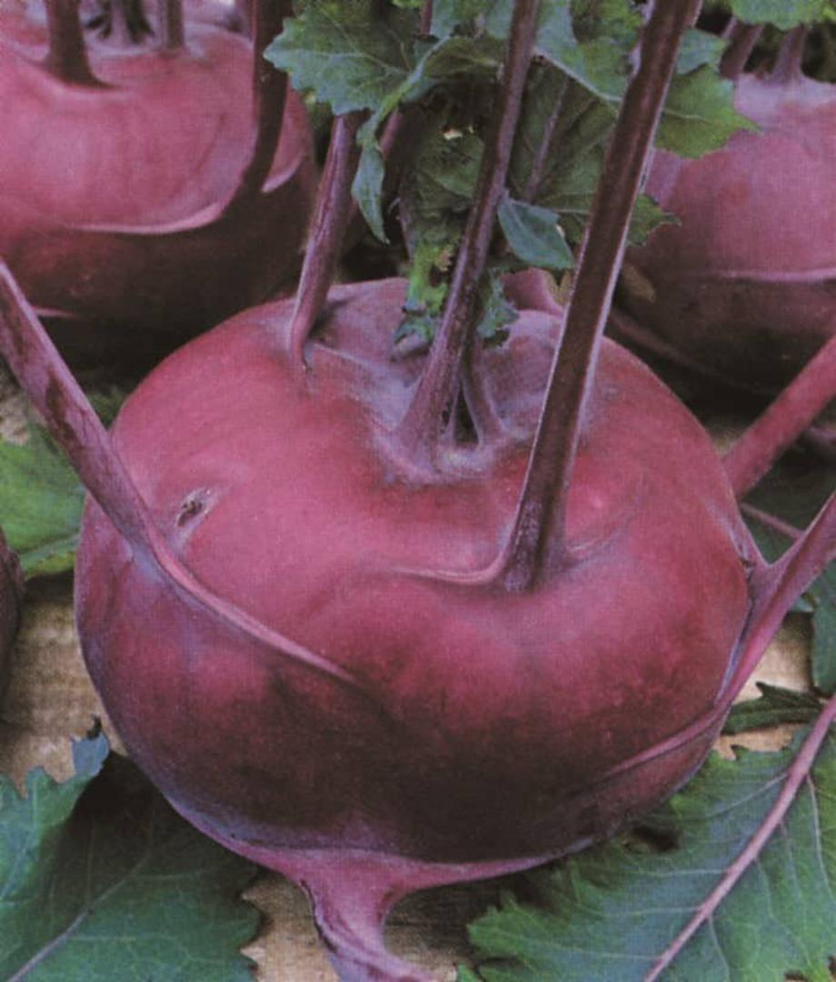 Kohlrabi Early Purple Vienna - turnip like purple stem