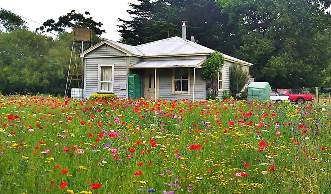 Wildflower Roadside Blend - 30 varieties of hardy flowering annuals