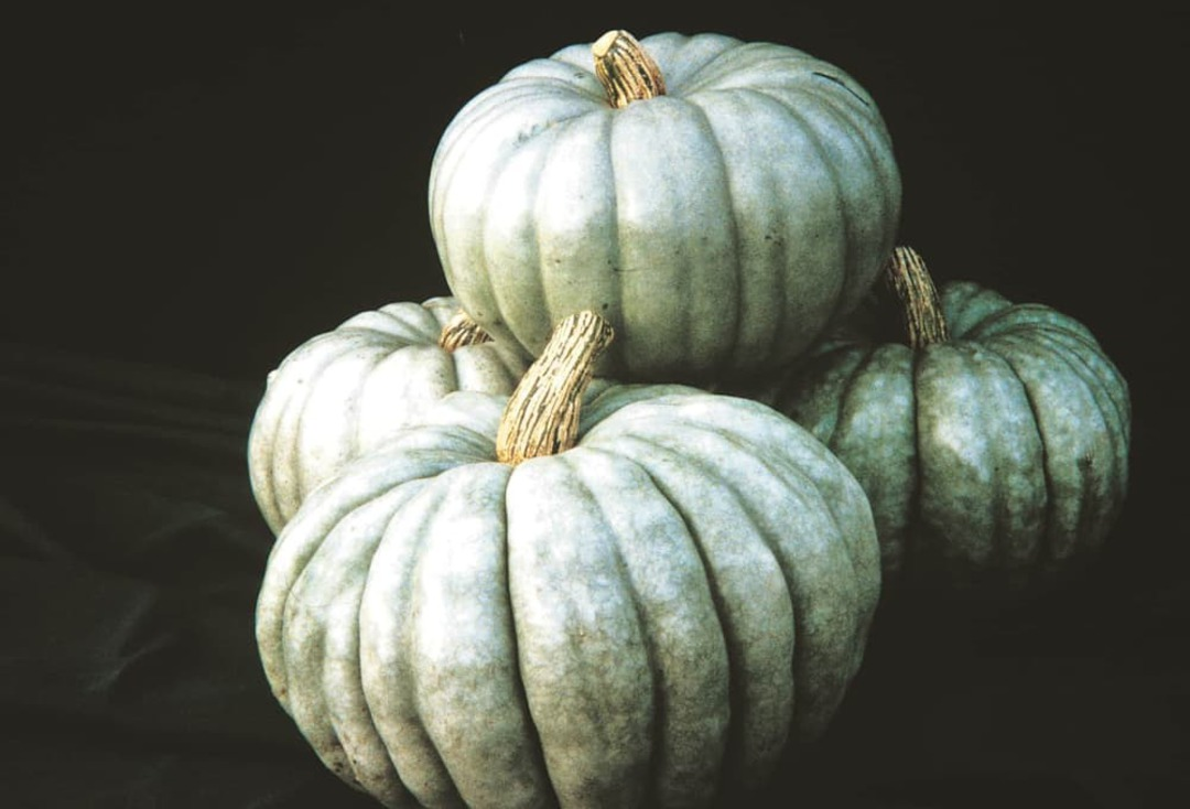 Pumpkin Jarrahdale - drum-shaped fruits with grey skin