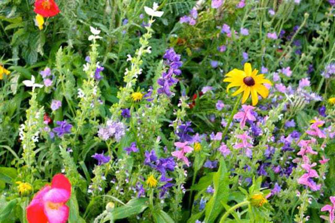 Wildflower Low Grow Blend