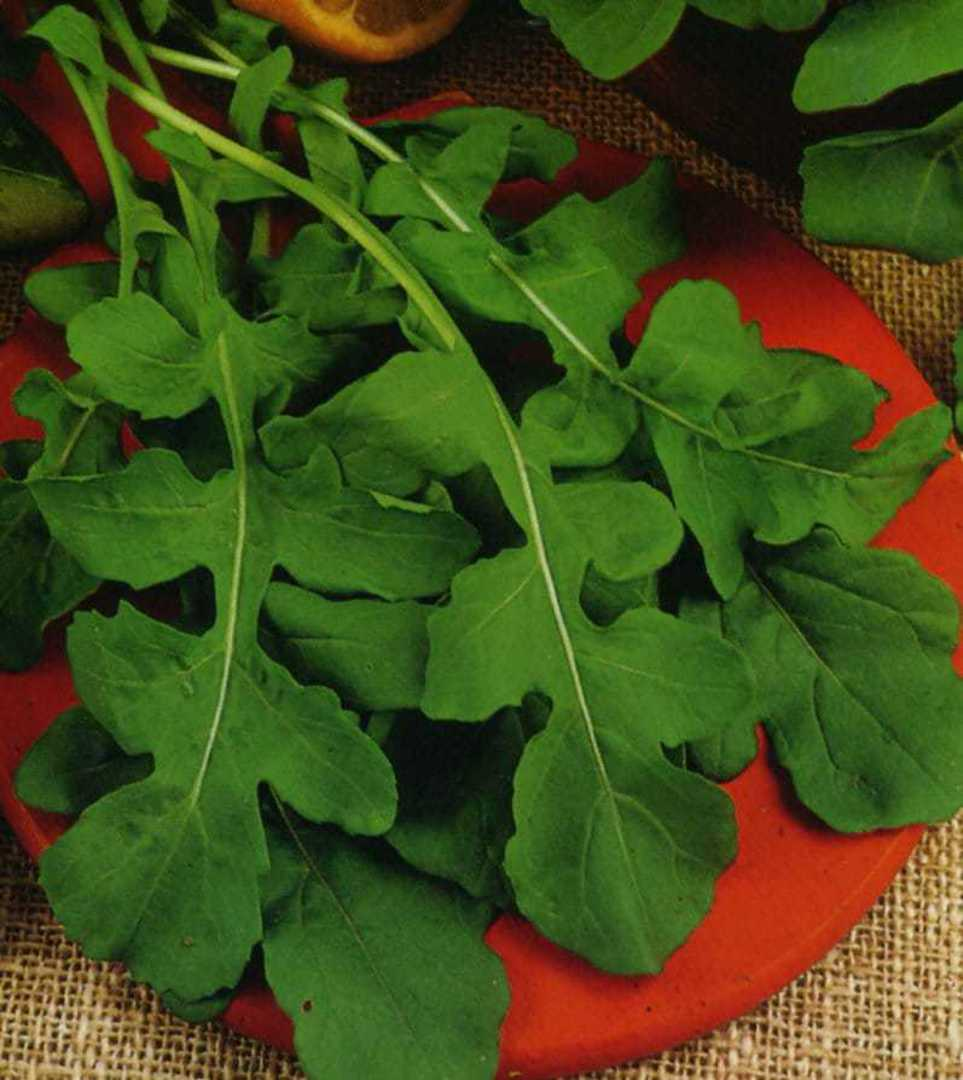 Organic Rocket -  unusual flavoured salad green