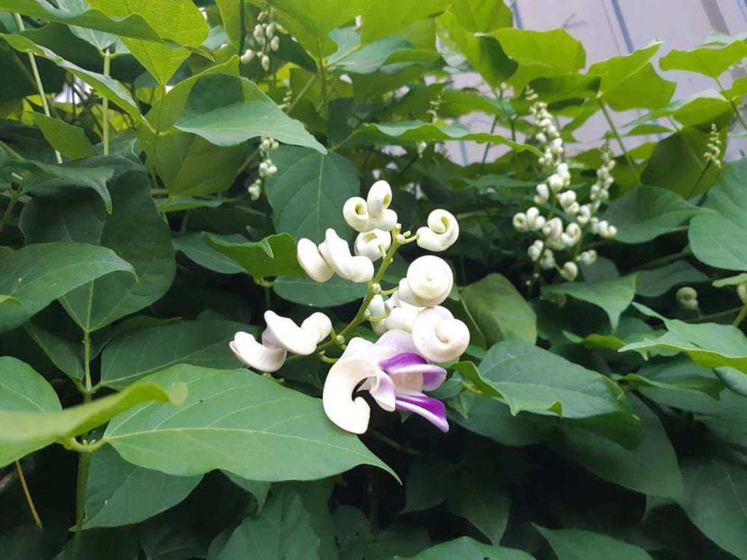 Fabulous Fragrant Flowers Selection